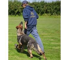 Best Protection dog training courses uk
