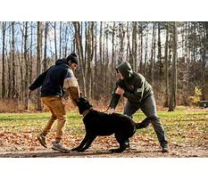 Best Protection dog training in michigan