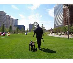 Best Protection dog training in tampa bay