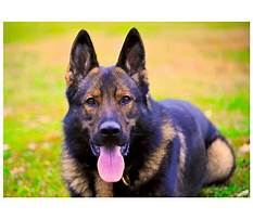 Best Protection dog training ontario