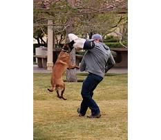 Best Protection dog training san antonio