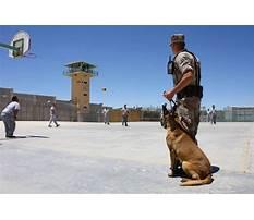 Best Protection dog training toronto