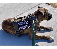 Best Ptsd service dog training jacksonville fl.aspx