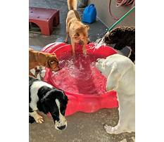 Best Puppy and dog training coventry