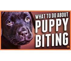 Best Puppy bite inhibition