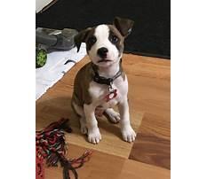 Best Puppy bites a lot
