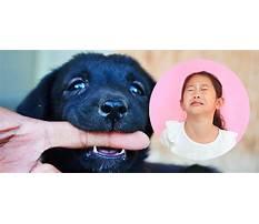 Best Puppy biting kids