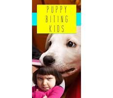 Best Puppy biting me
