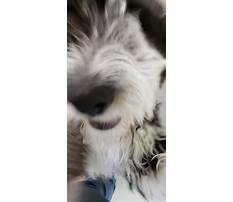 Best Puppy dog training school.aspx