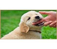 Best Puppy hand biting