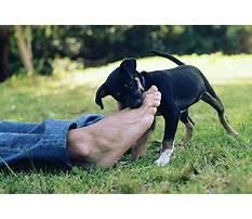 Best Puppy training biting feet
