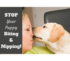 Best Puppy training to stop biting