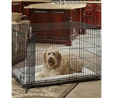 Best Purpose of crate training your dog