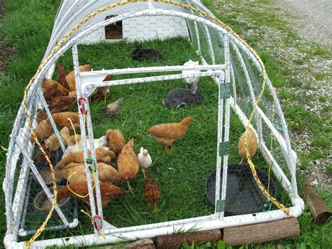 Pvc Chicken Tractor Plans