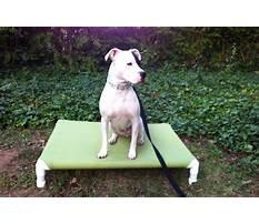 Best Pvc raised dog bed.aspx