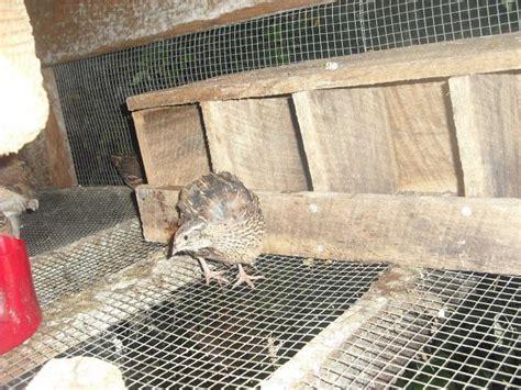 Quail-Nest-Box-Plans