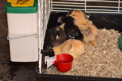 Rabbit Bedding For Cage