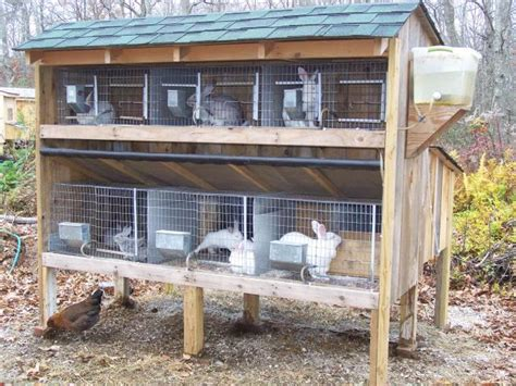Rabbit Hutch Plans Breeding For Meat