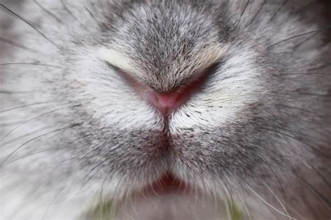 Rabbit runny nose Image