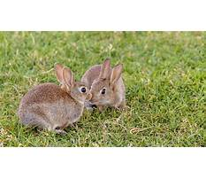 Best Rabbit cages for sale in indiana