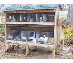 Best Rabbit housing design guide pdf