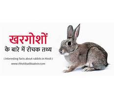 Best Rabbit information in hindi