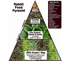Best Rabbit nutritional management
