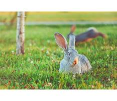 Best Rabbits hopping images