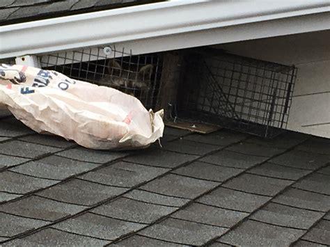 Raccoon-One-Way-Door-Diy