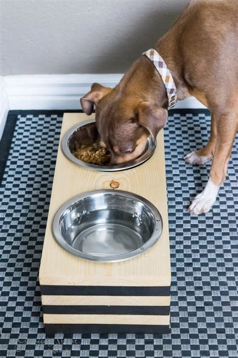 Raised Dog Bowls Diy Room