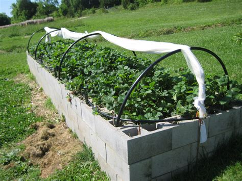 Raised Strawberry Bed Ideas