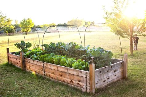 Raised-Bed-Layout-Plans