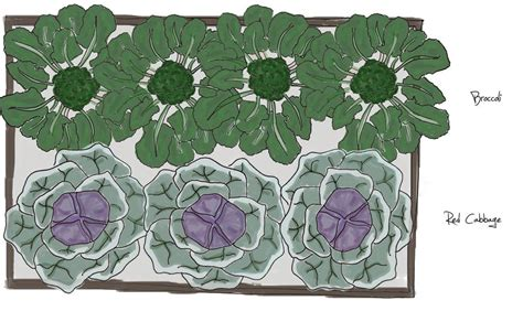 Raised-Garden-Bed-Plan-For-Cabbage