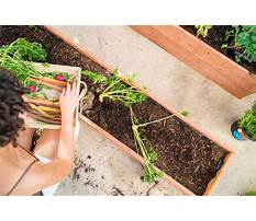 Best Raised bed design path width