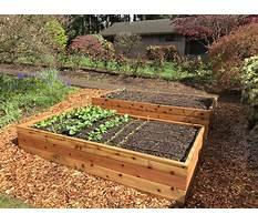 Best Raised garden beds designs