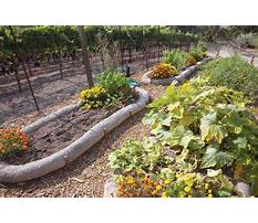 Best Raised garden beds diy.aspx