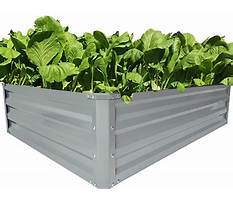 Best Raised garden boxes winnipeg