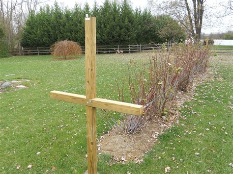 Raspberry Trellis Instructions