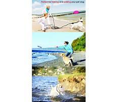 Best Recall dog training derby.aspx