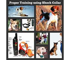 Best Rechargeable dog training collars.aspx