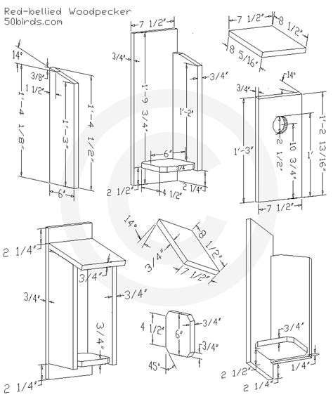 Red Bellied Woodpecker Bird House Plans