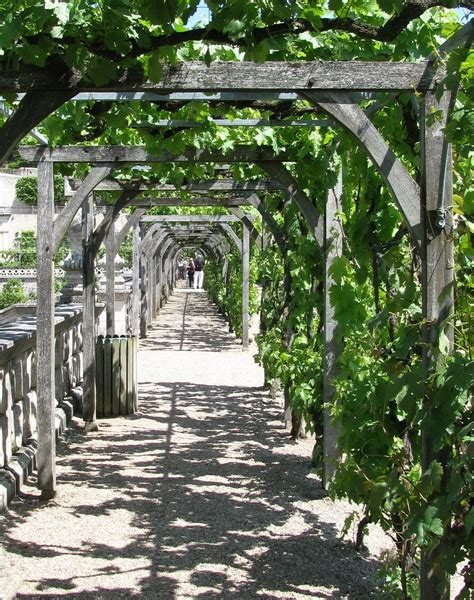Rustic Grape Arbor Plans