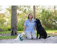 Best Sarasota dog training.aspx