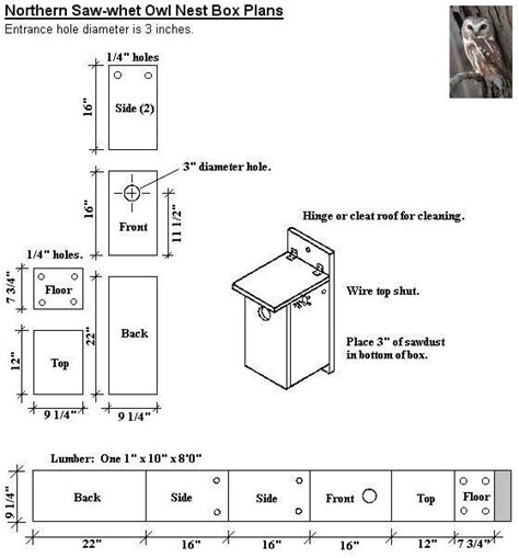 Saw whet Owl Nest Box Plans