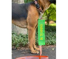 Best Service dog in training leash wrap