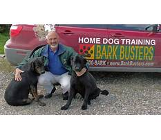 Best Service dog training billings mt