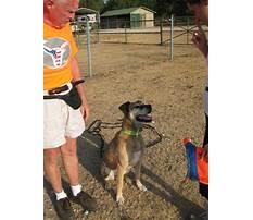 Best Service dog training dfw