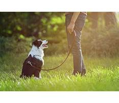 Best Service dog training in delaware