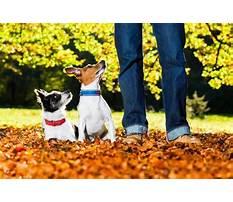Best Service dog training nashville tn.aspx