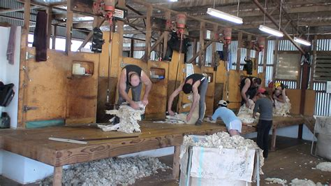 Shearing Shed Design Nz